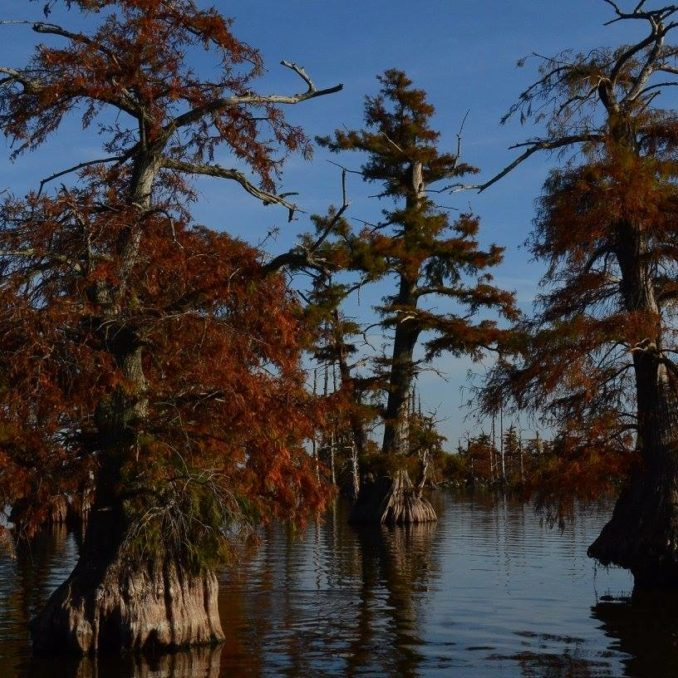 Fall colors at Reelfoot Lake